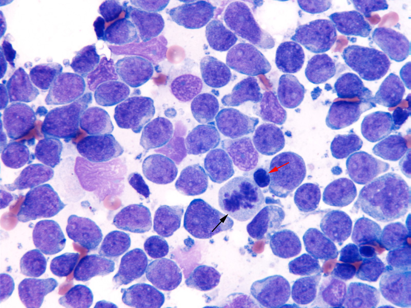 Canine lymphosarcoma causes