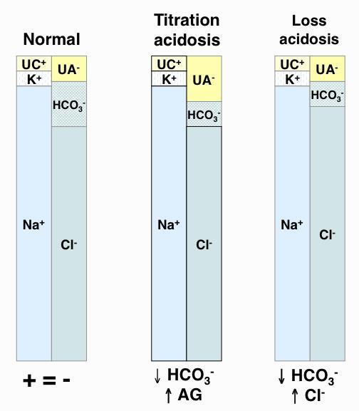 metabolic acidosis | eclinpath, Skeleton