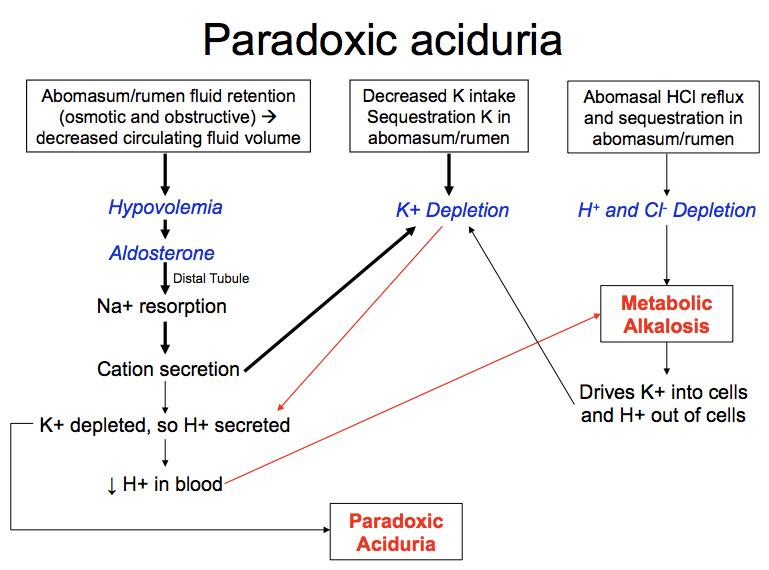 Paradoxic Aciduria Eclinpath